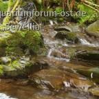 Eins von Tausend Waldbächlein im Harz