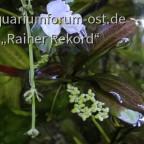 Ableger und Blüten 1