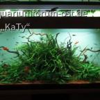 Wohnzimmer-Aquarium 2014