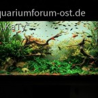 Das Wohnzimmer-Aquarium im Jahr 2012
