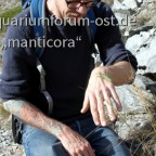 Mantis religiosa in situ Schweiz