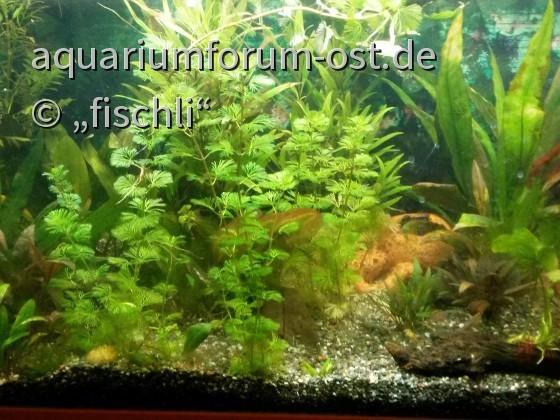 mein_Aquarium