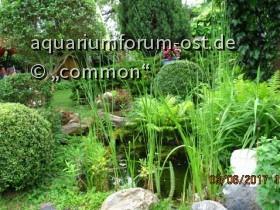 Commons Garten III