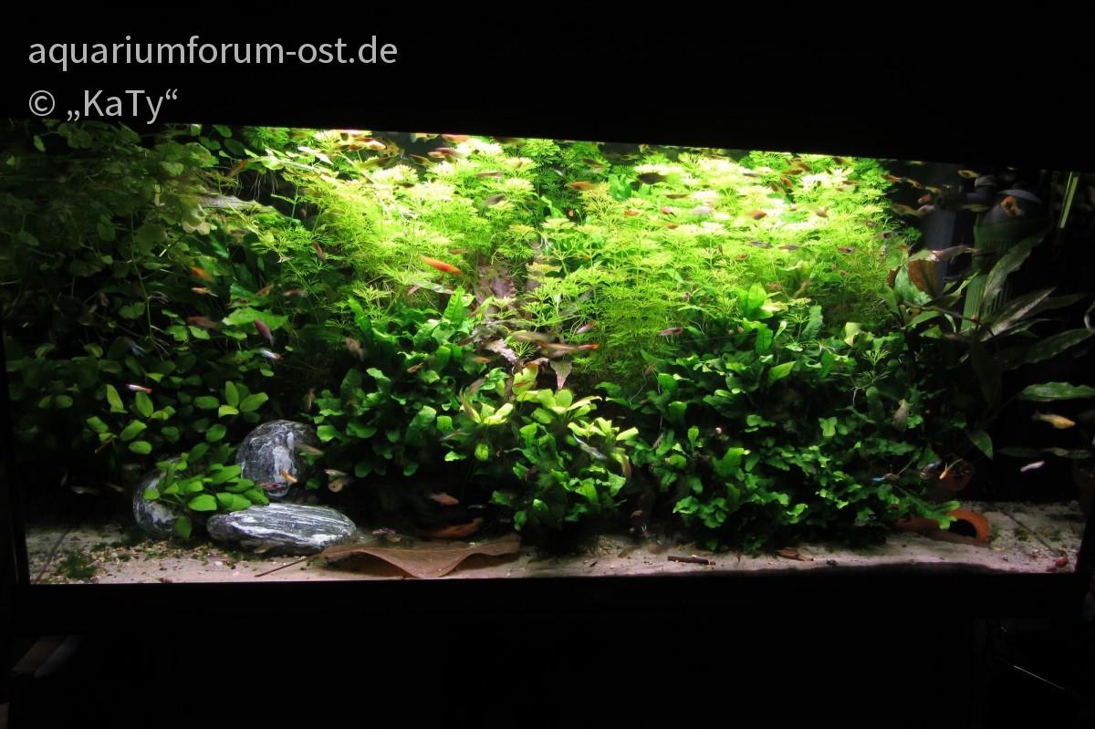 Aquarium im Schlafzimmer