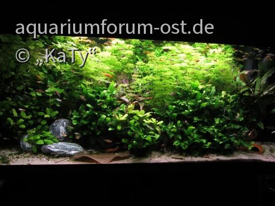 Meine Aquarien - Aquarium-Forum aus dem Osten ohne Grenzen ...