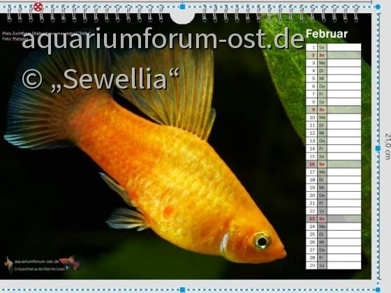 Test Vorschau Forenkalender Februar 2020 Format A4