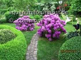 Commons  Garten