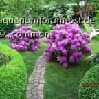 Commons  Garten I