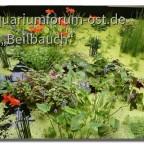 Teichpflanzen auf der BUGA 2021 in Erfurt Halle 2