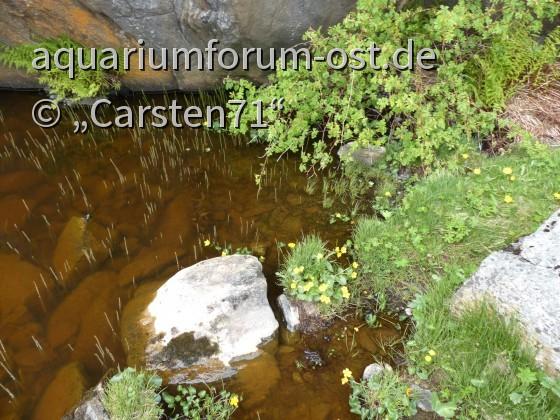 Süßwasserbiotop in Norwegen (Aukra)