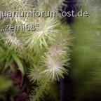 Hintergrundpflanze