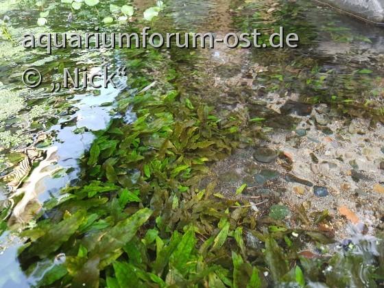 Südostasiatisches Biotop