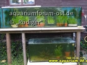 Gartenaquarien frisch eingerichtet