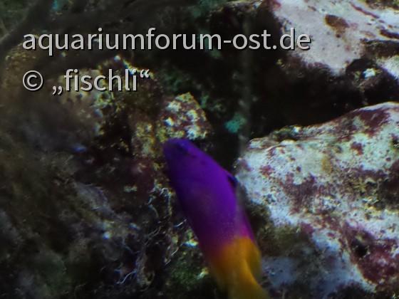 Kölner Zoo einschließlich Zooaquarium und Terrarium