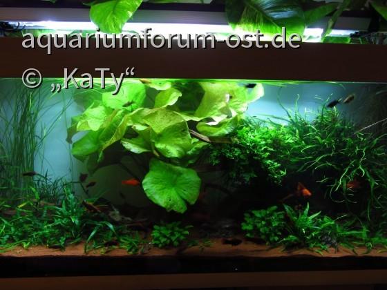 450 Liter Aquarium im Wohnzimmer