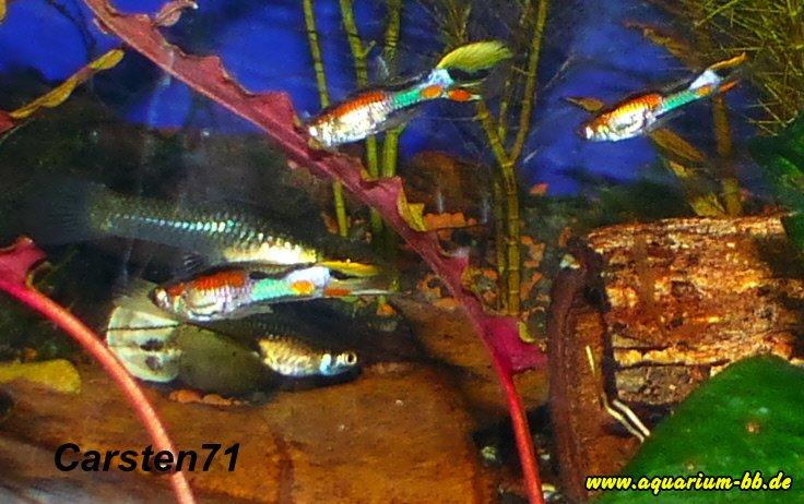 pflanzen aquarium parasitenfrei