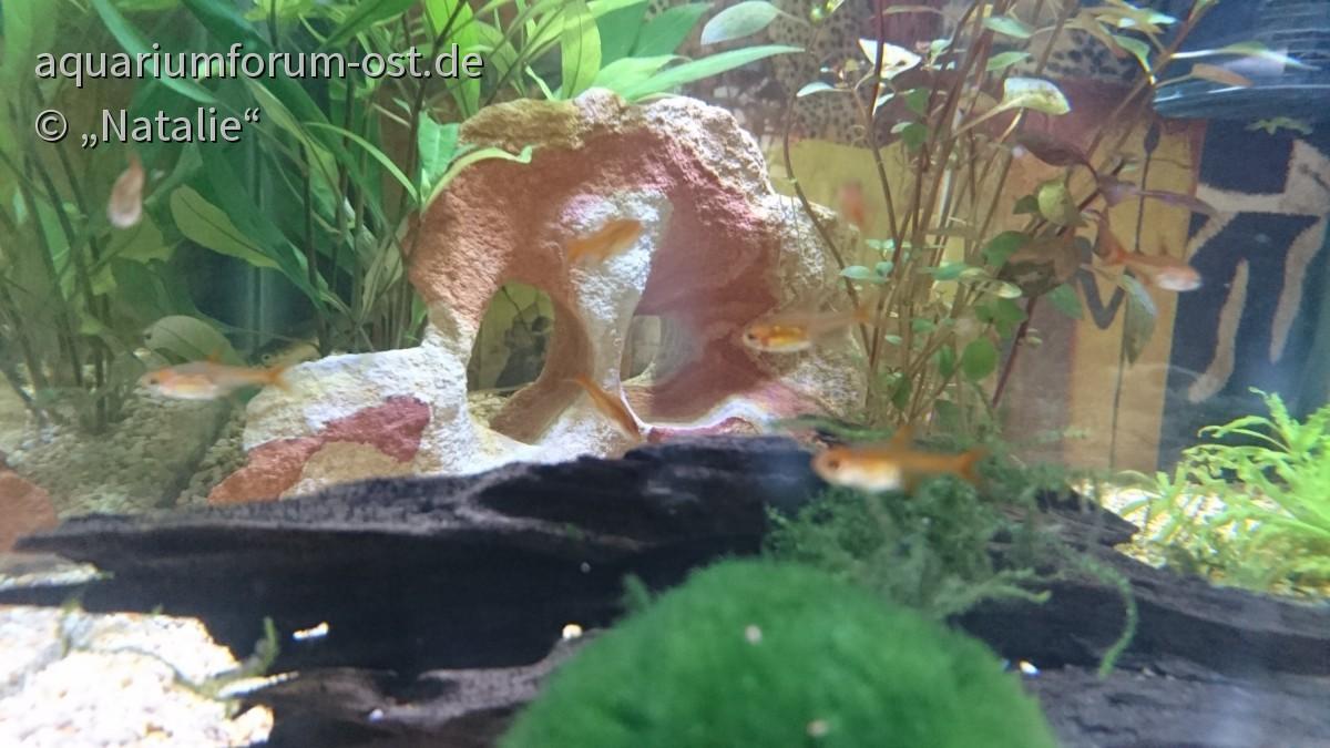 Meine sogenannten Erdbeerfische