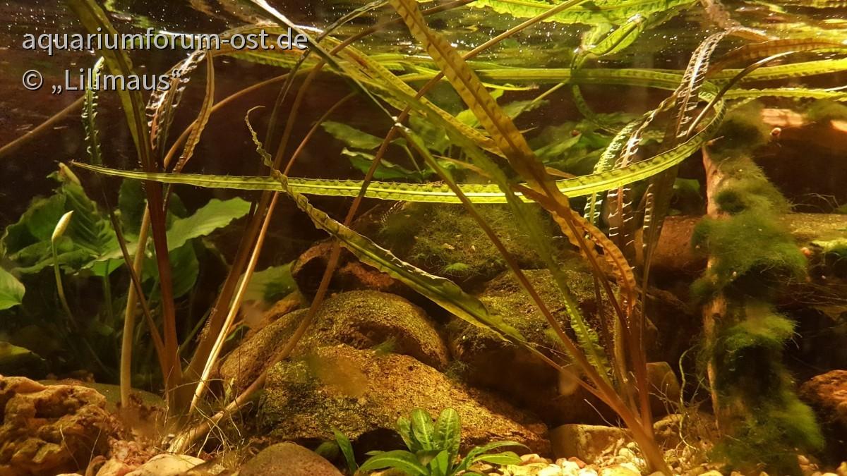 Das sind meine derzeit schönsten Pflanzen . . . :)