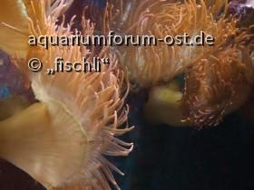 Zooaquarium_köln_4