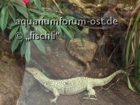 kölner_zoo_terrarium_4