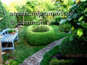 Commons Garten II