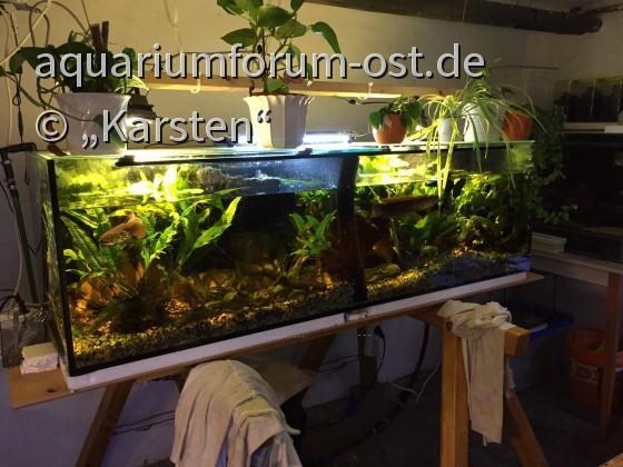 Ch.asiatica_Trenn-Schwamm