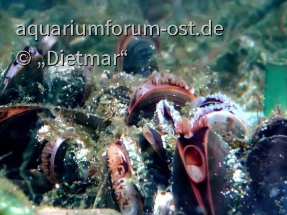 Starterkultur im Ostsee Aquarium