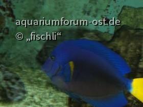 Zooaquarium Köln 13
