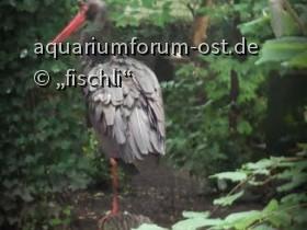 Kölner_zoo_16