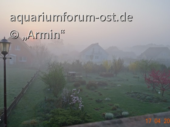 Aquarianergarten im Morgennebel