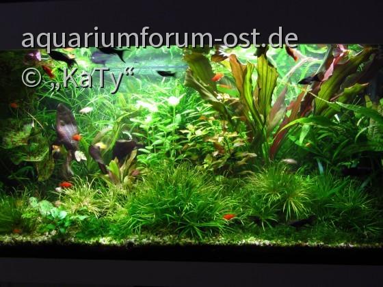 180 Liter Aquarium im Jugendzimmer