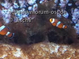zooaquarium_köln_3