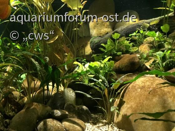 Aquarium Stand April 2017
