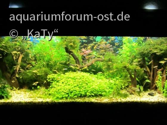 Das Jugendzimmer-Aquarium im Jahr 2012
