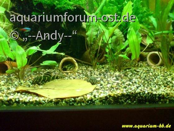 Becken von--Andy--