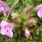 Pflanzen in Norwegischer Natur