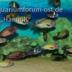 Aquarium-Ausschnitt