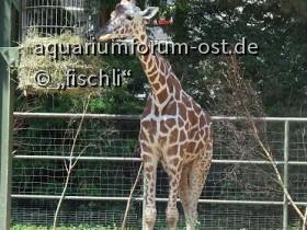 kölner_zoo_2