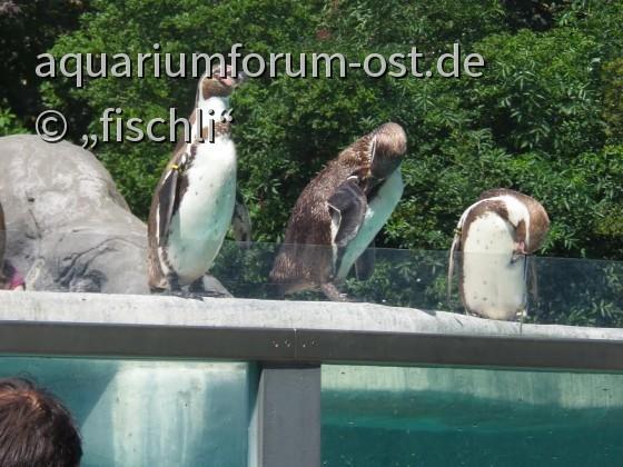 kölner_zoo_14