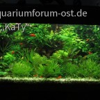 Jugendzimmer-Aquarium 2014