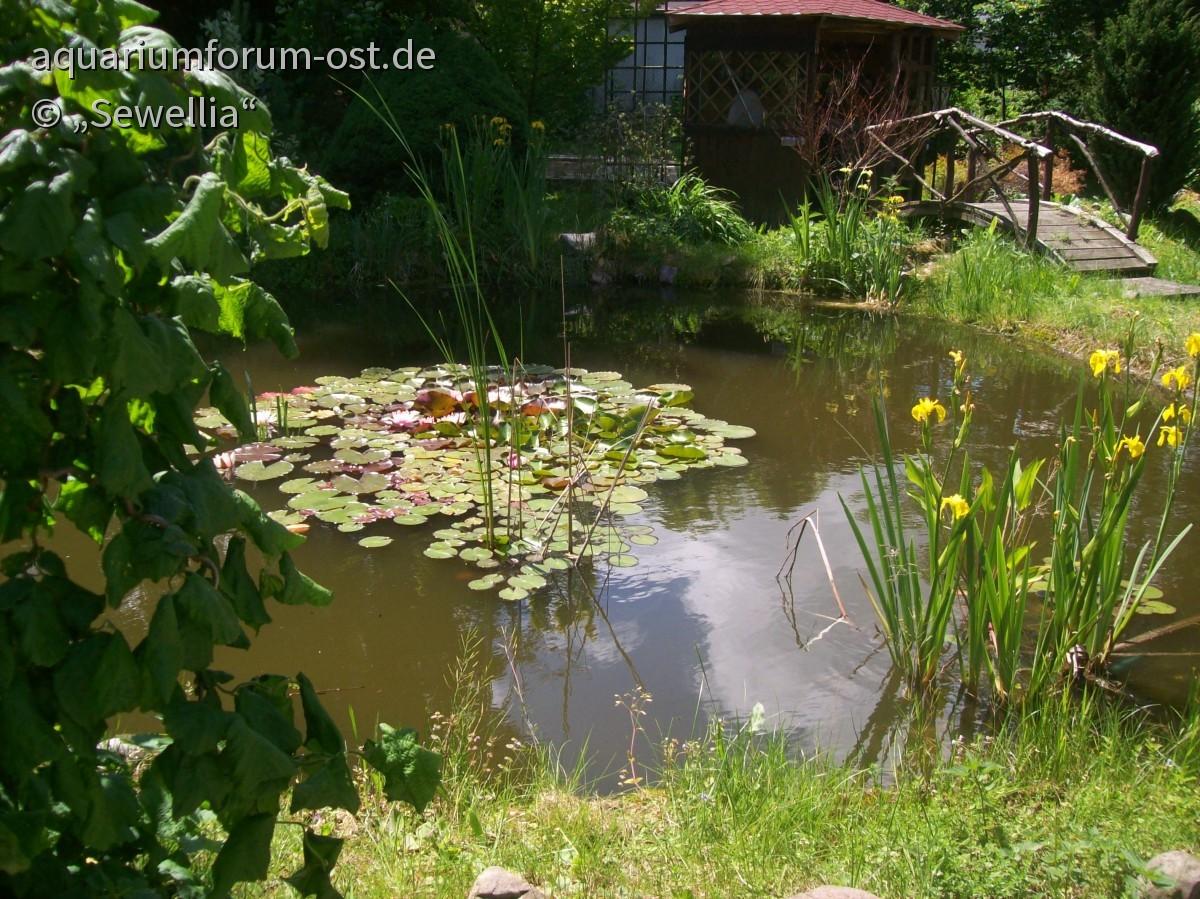 Gartenteich mit Bachlauf und Brücke - Aquarium-, Aquaristik-Forum ...