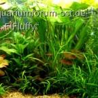 Aquarium 125 l