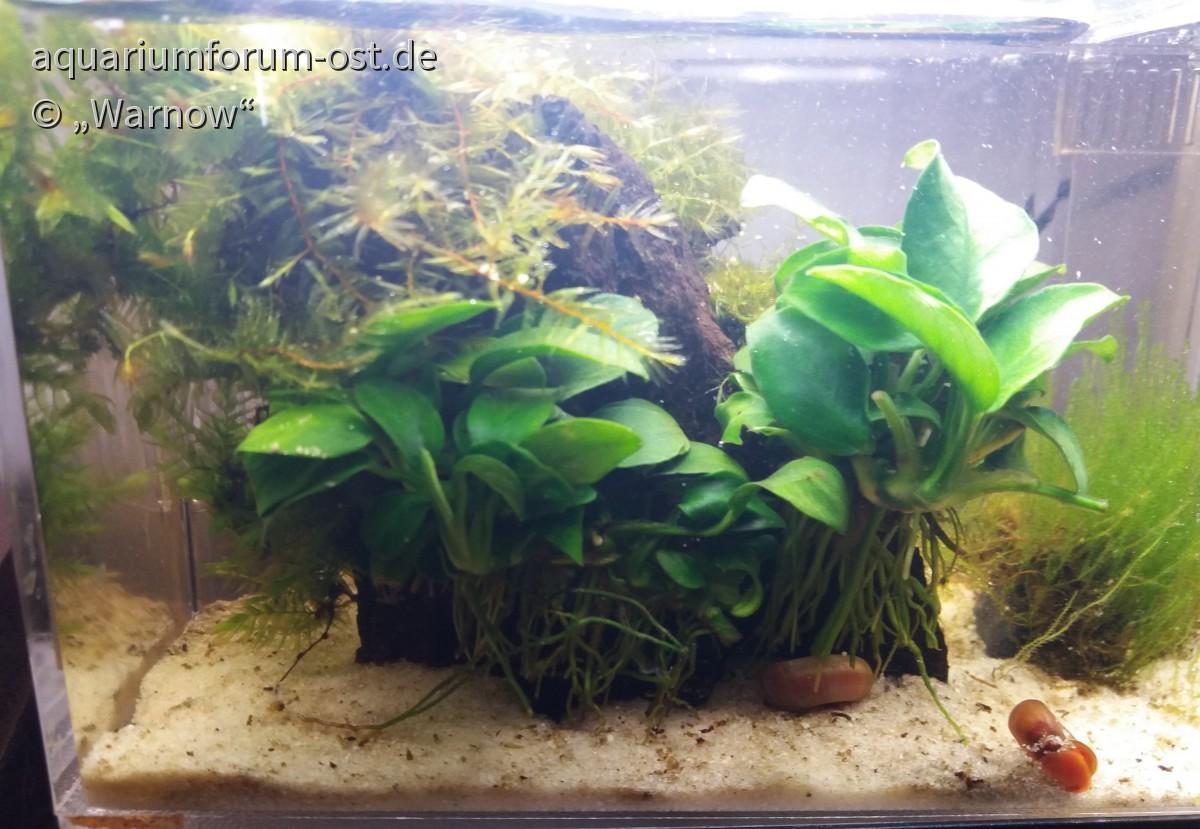 Mein 780 Milliliter Aquarium