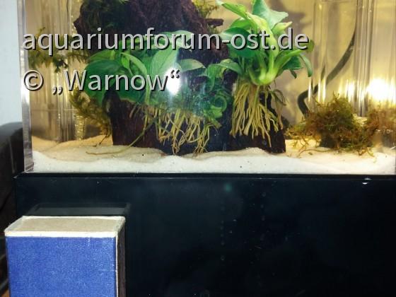 Mein 780 Milliliter Aquarium Größenvergleich