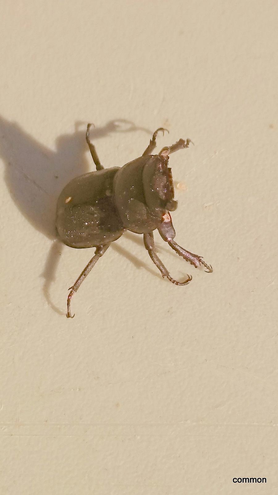 Käferrätsel 3