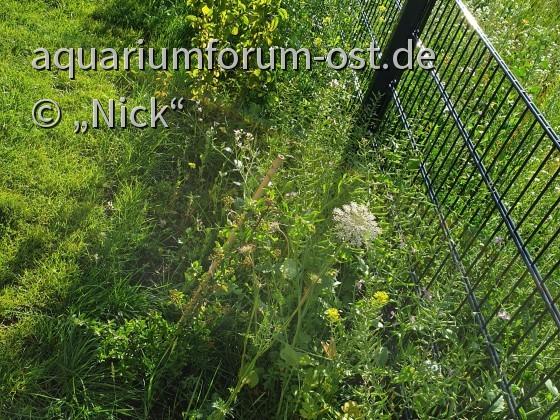 Naturgarten von Nick