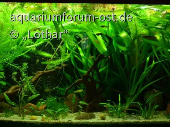 Mein Aquarium aktuell