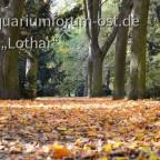 Spremberg im Herbst