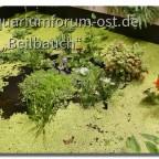 Der 2. Teich auf der BUGA 2021 in Erfurt Halle 2