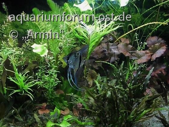 Ein wunderschönes Aquarium , von Falke eingerichtet